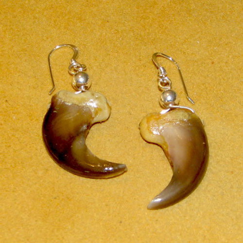 Claw & Tooth Earrings